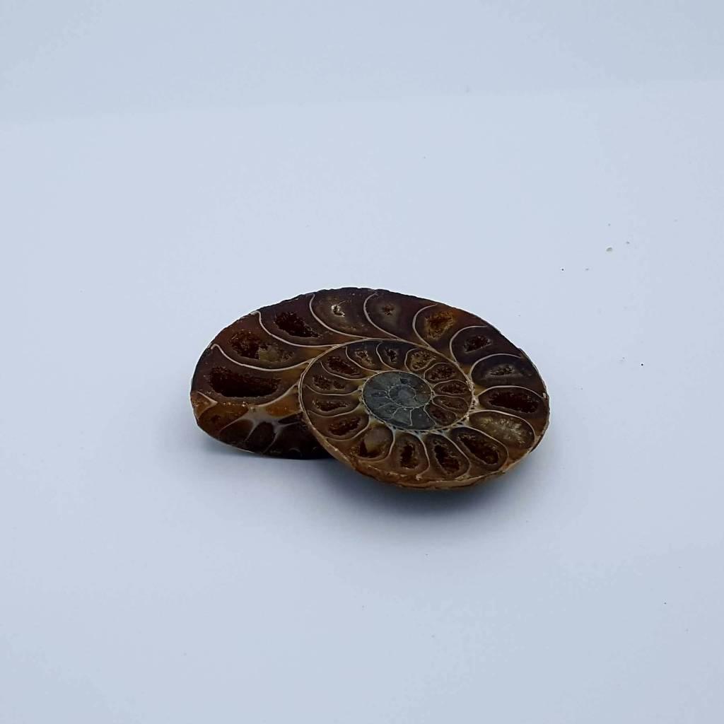 demi-ammonite 5-8cm