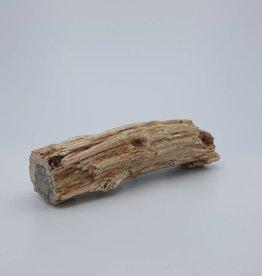 """bois fossile Madagascar 3 à 5"""" longueur"""