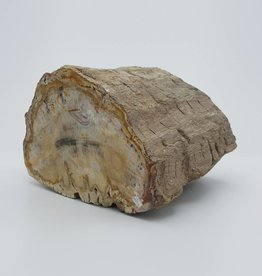 bois fossile Madagascar diamètre +7cm