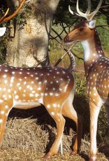 Southern Cross Targets SCT 3D Chital Stag.