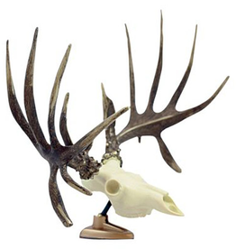 Big Rack Raxx Whitetail Figurine