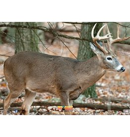Nice Target Nice Target Deer Broadside Right 1 (Each)