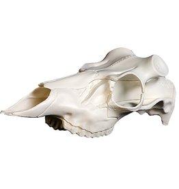 Mountain Mikes Skull Master
