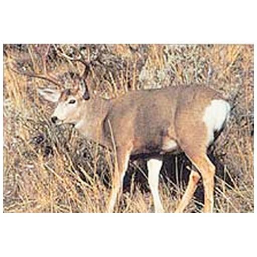 Delta Delta #109 Mule Deer Broadside Target