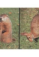 Delta Delta #108 Groundhog & Rabbit Target