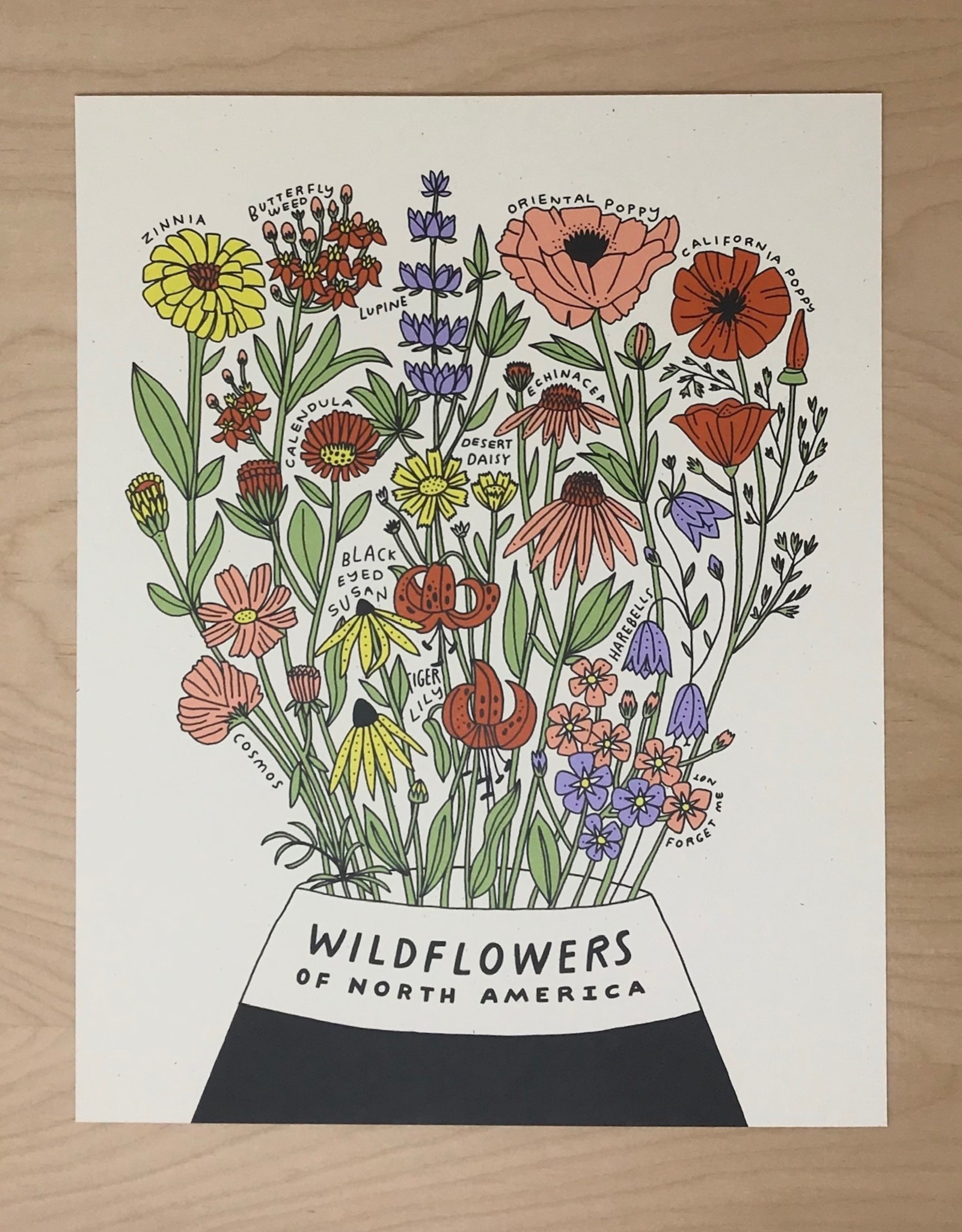 Worthwile Paper Print- Wildflowers of North America