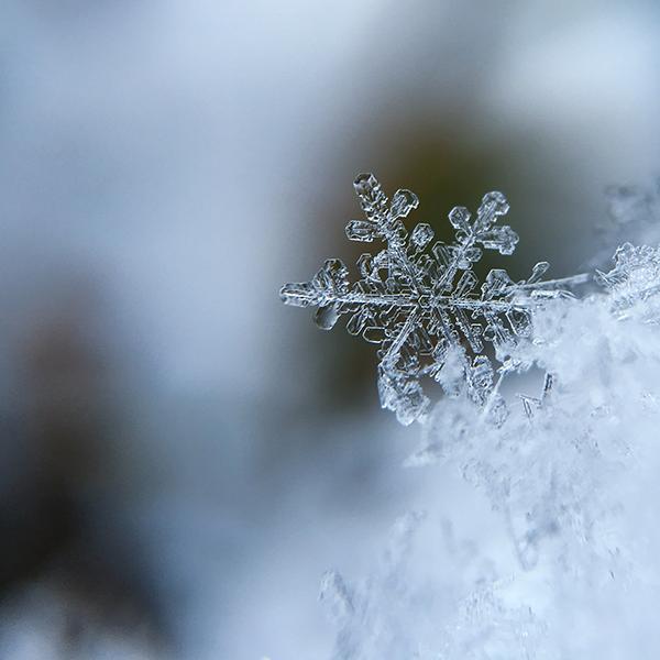 Voici en plein ce qu'il vous faut cet l'hiver!