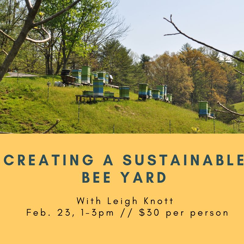 Creating a Sustainable Bee Yard