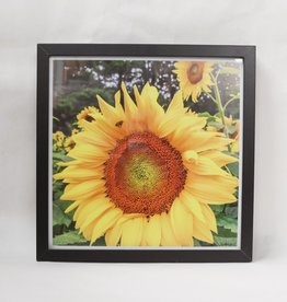 """Framed Bee Photo - Sunflower """"Here Comes the Sun"""""""