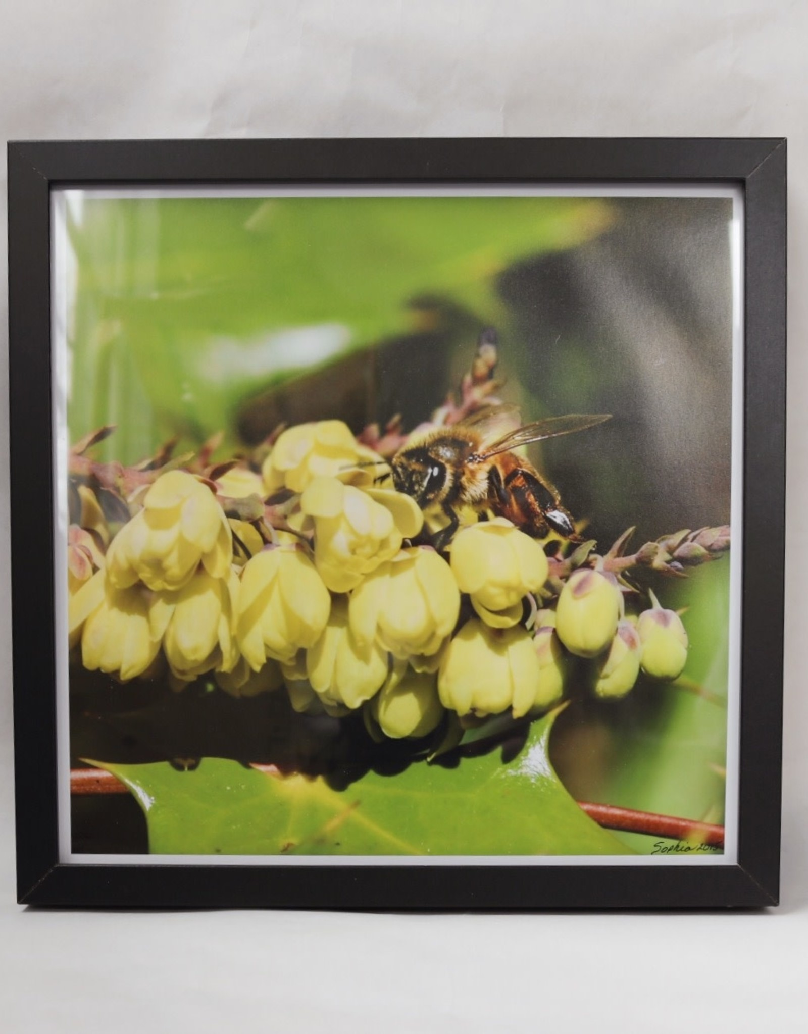 "Framed Bee Photo - Yellow Flowers "" Peek - A - Bee"""