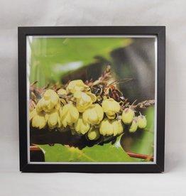 "Framed Bee Photo - Yellow Flowers "" Peek - A - Bee"""
