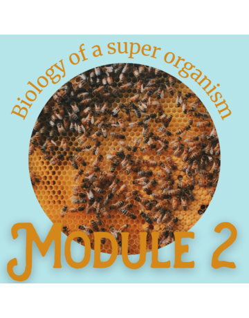 Honey & the Hive Beginner Series: Module 2