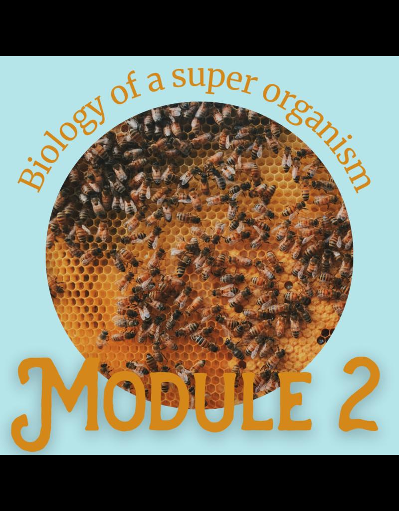 Honey & the Hive Beginner Series: Module 2