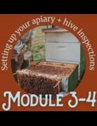 Honey & the Hive Beginner Series: Module 3 & 4