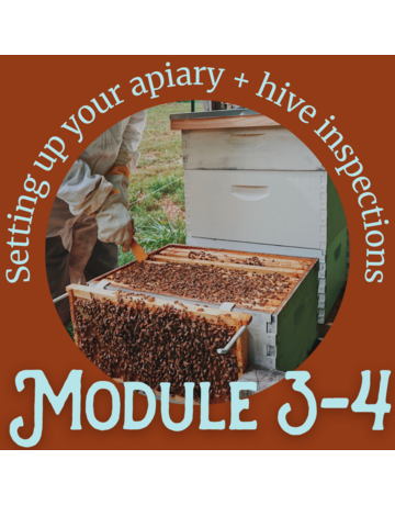 Honey & the Hive Beginner Series: Module 3 & 4