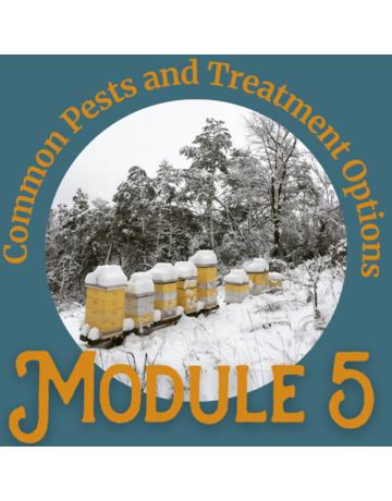 Honey & the Hive Beginner Series: Module 5