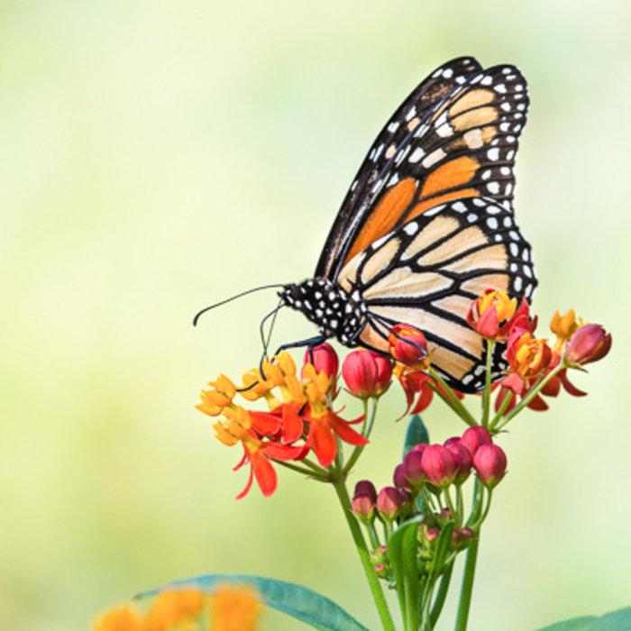 Plant More Pollinators