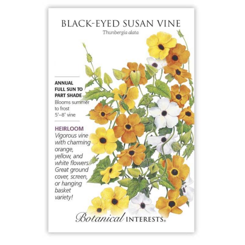 BI Seed, Black Eyed Susan Vine