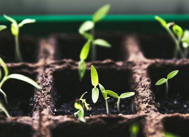 Seeds & Seed Starting