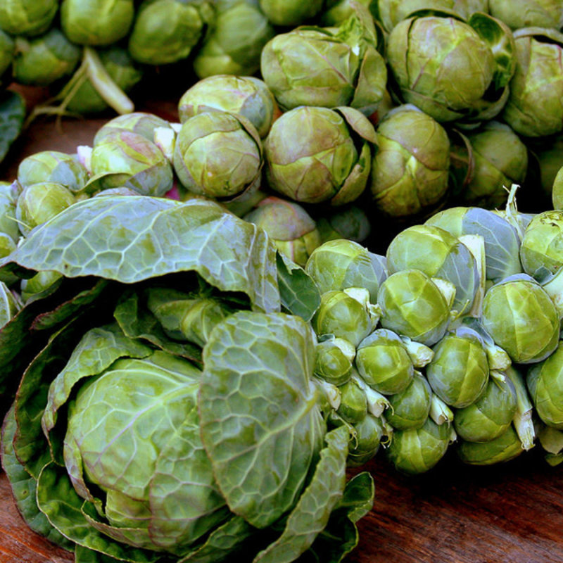 Brussel Sprouts Jade Cross 4 Pack