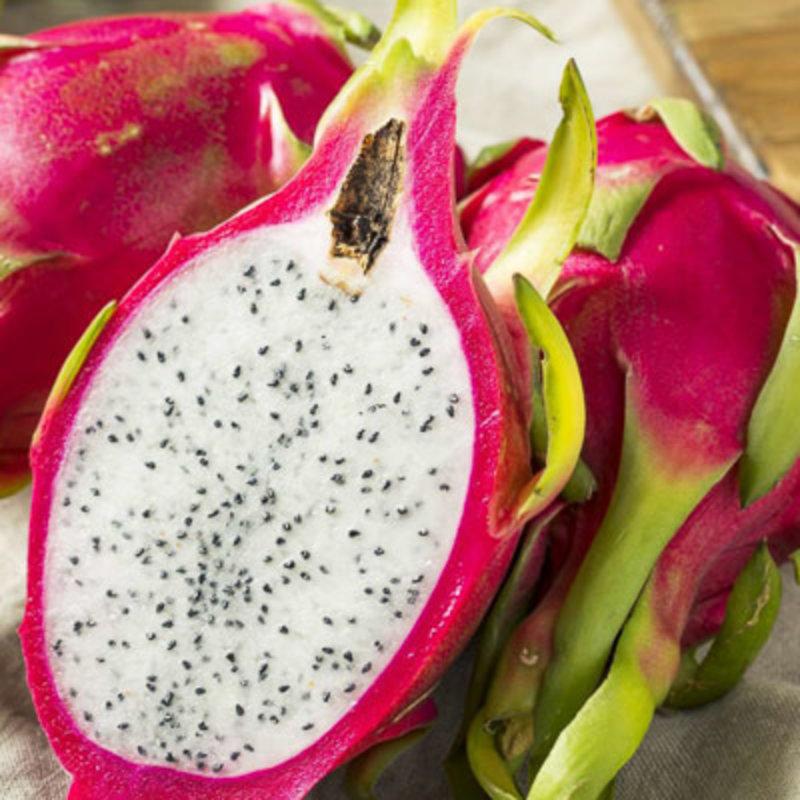 """Hylocereus u Dragon Fruit 4.5"""""""