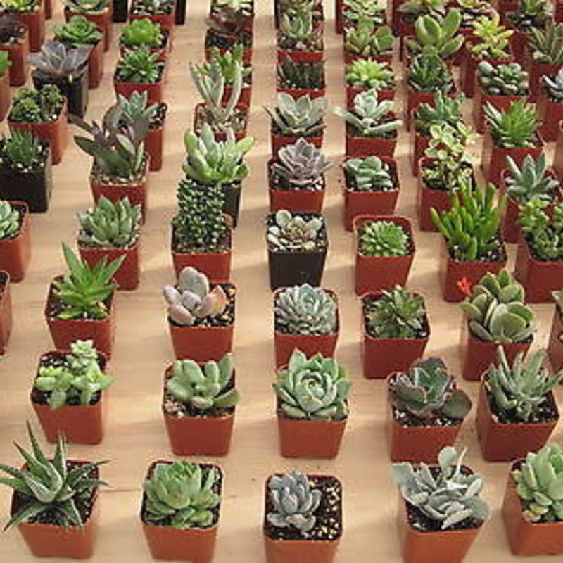 "Cactus Succulent Asst 2"""