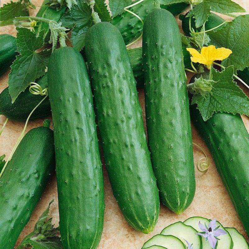 Cucumber Dasher 4 Pack