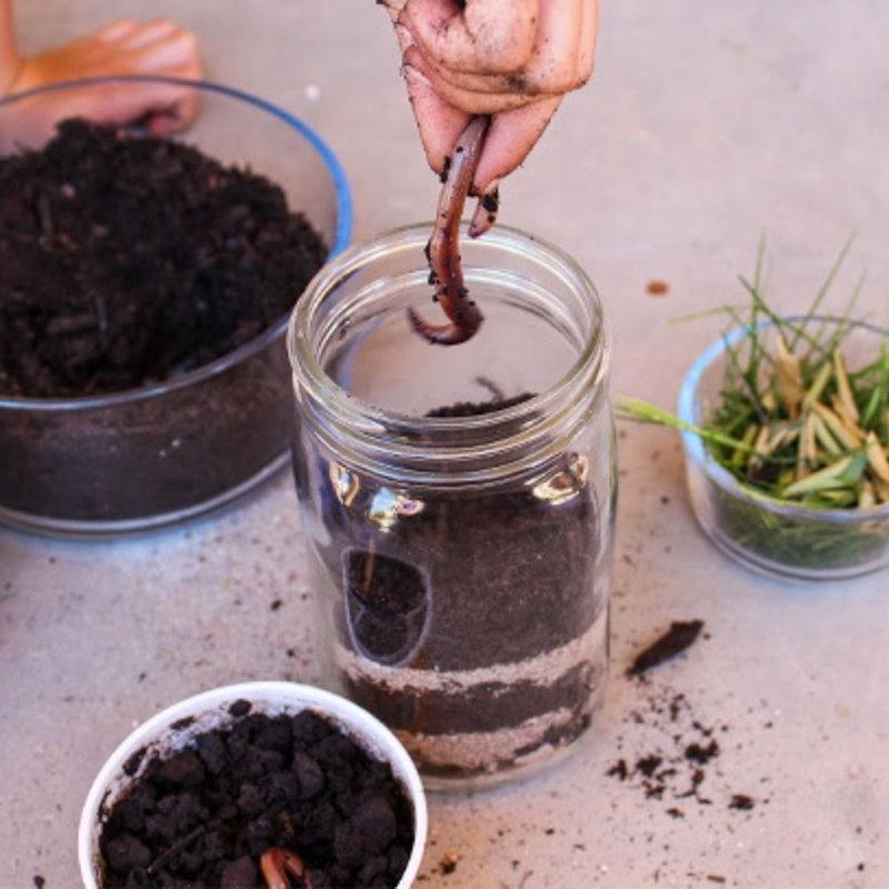 Field Trip Kit : Worm Farming