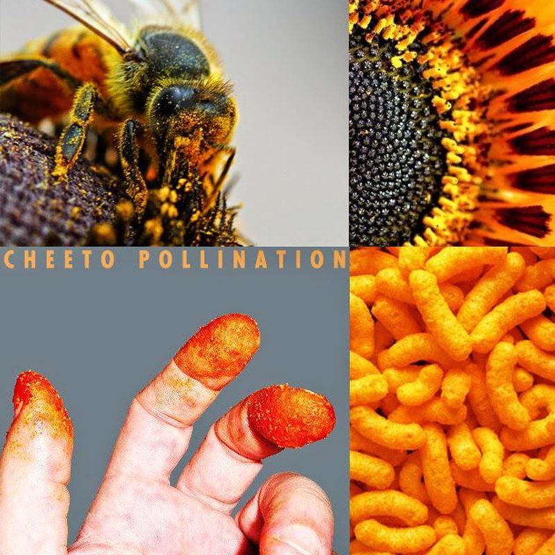 Field Trip Kit: Cheeto Pollination Experiment