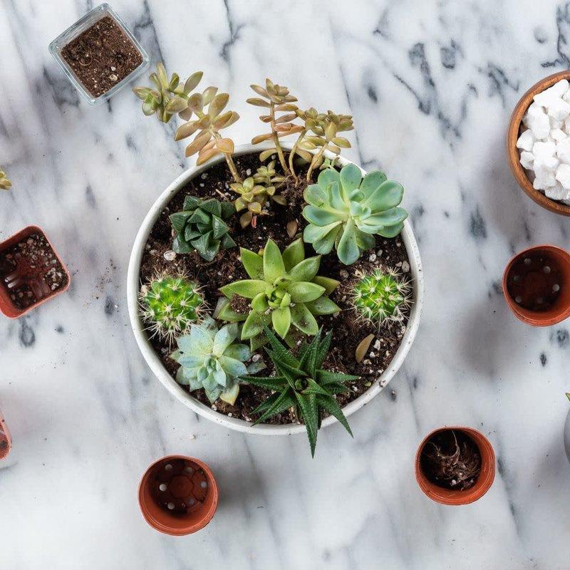 DIY Succulent Garden Kit + Wine