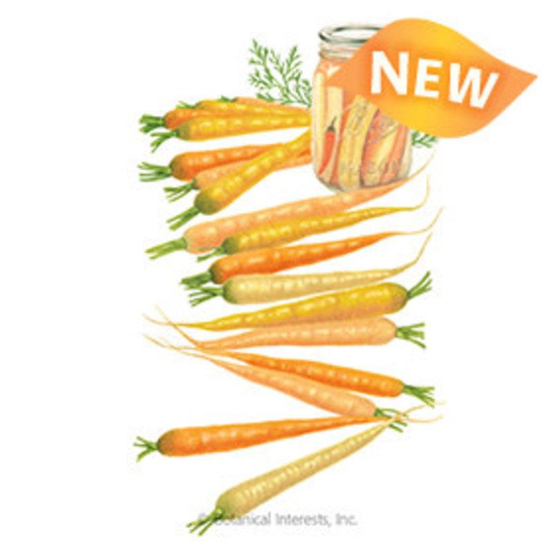 BI Seed, Carrot Rainbow Hybrid