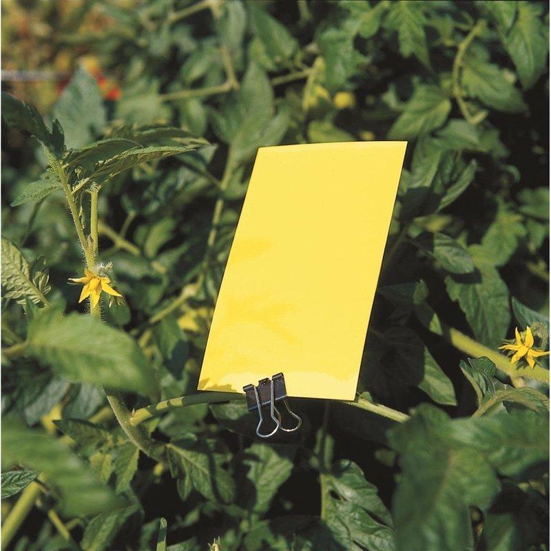 "Gnat Trap Yellow 3"" x 5"""