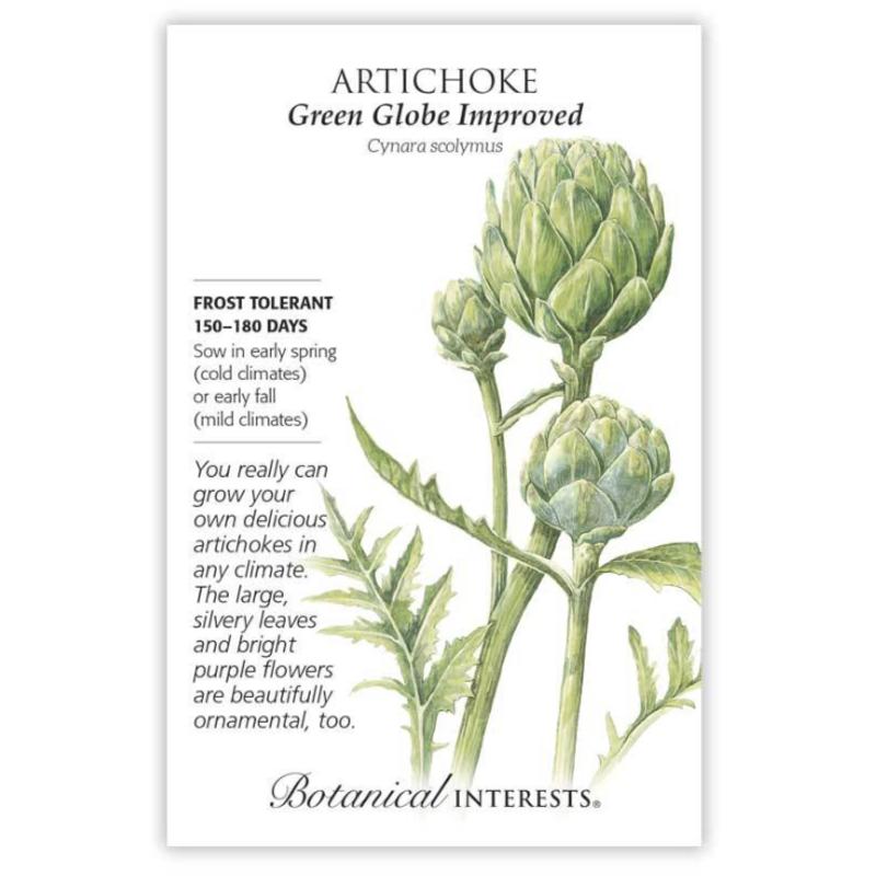 BI Seed, Artichoke Green Globe Improved