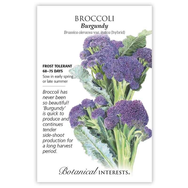 BI Seed, Broccoli Burgundy