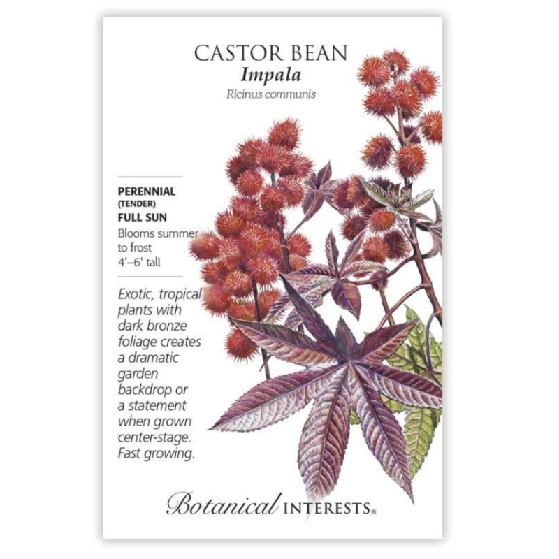 BI Seed, Castor Bean Impala