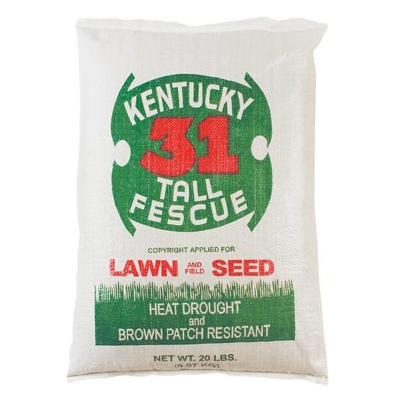 Kentucky 31 Tall Fescue 50#