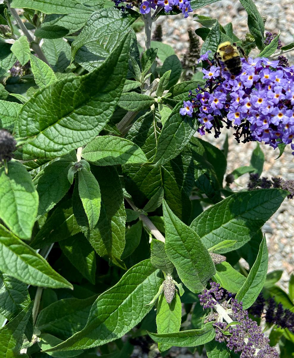 Be Pollinator Ready