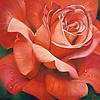 Rose painting - Beth Swilling