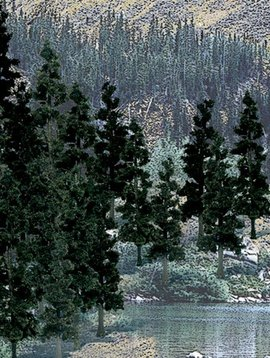 "Woodland Scenics WOOTR1581 Value Trees, Conifer 4-6"" (24)"
