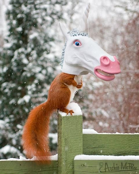 Unicorn - Big Head Squirrel Feeder DNR