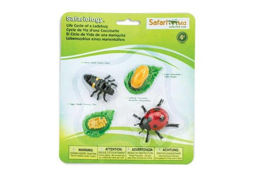 SAFARI LTD Life Cycle of a Lady Bug