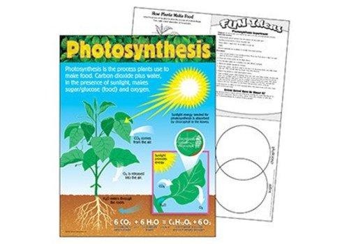 Trend Enterprises Photosynthesis Poster