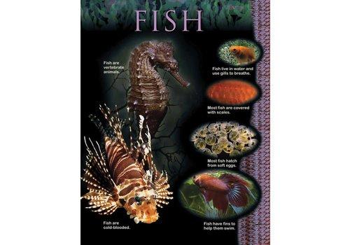 Creative Teaching Press Fish Animal Classification Chart