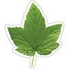 Carson Dellosa Woodland Whimsy Green Leaf Cut-Outs *