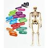 ASHLEY PRODUCTIONS Foam Manipulatives Human Skeleton Puzzle *