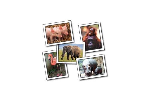 Carson Dellosa Favorite Animals - Learning Cards*