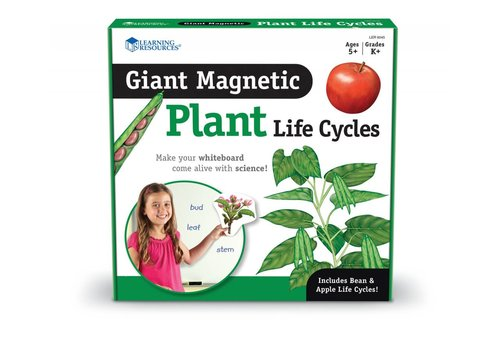 Learning Resources Giant Magnetic Plant Life Cycle * (D)