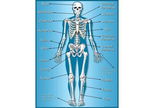 Teacher Created Resources Skeleton Chart *