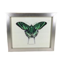 Small Framed Butterfly Art