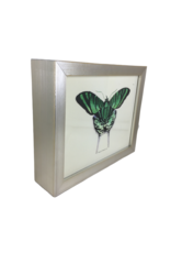Small Framed Butterfly Art